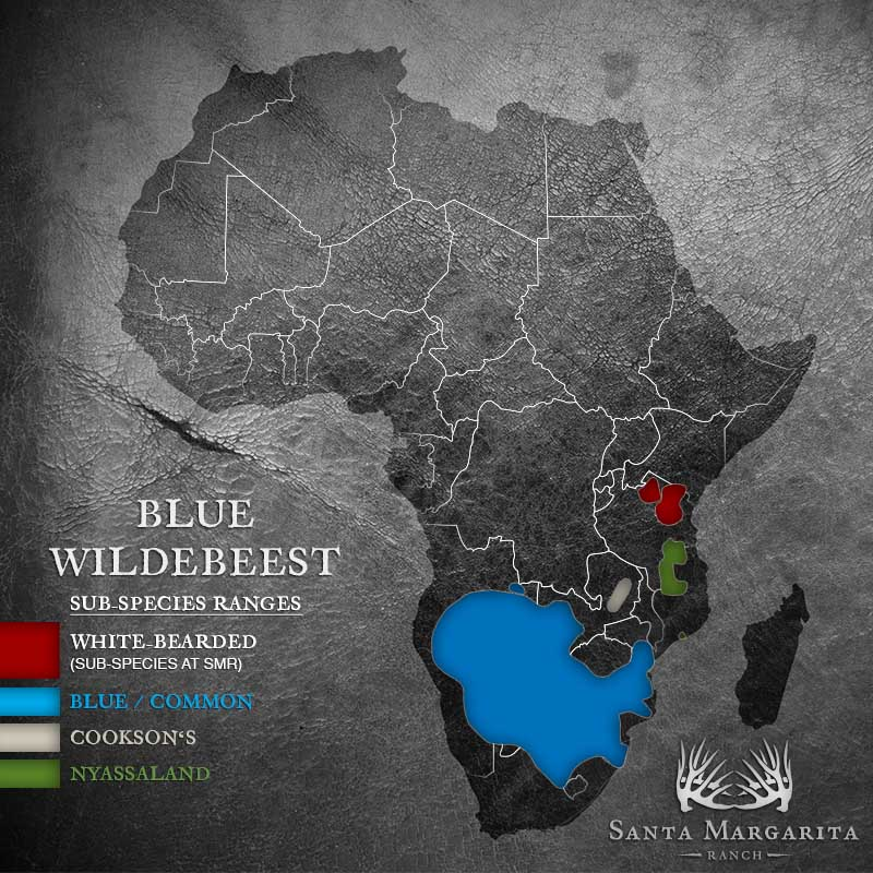 range map of Blue Wildebeest