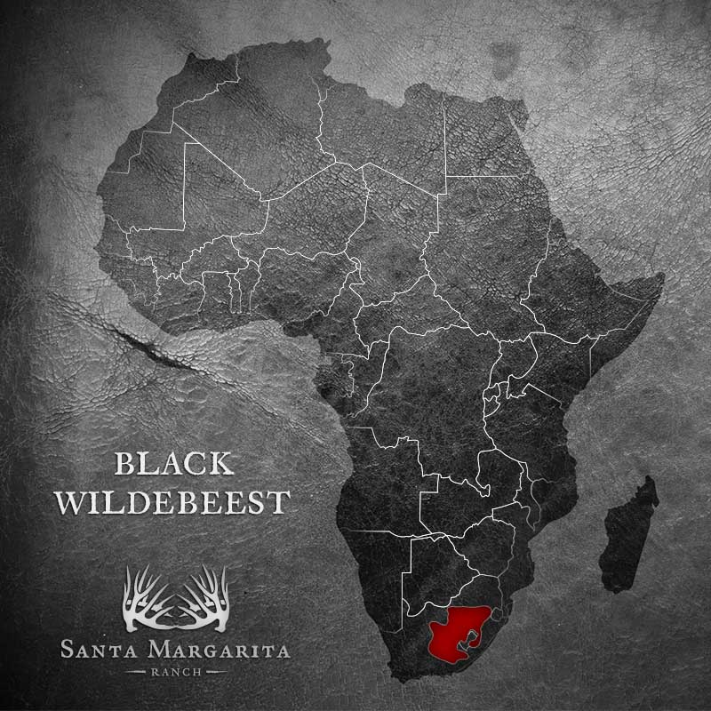range map of Black Wildebeest